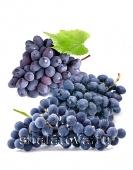 Винный (Технический) виноград