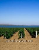 Продажа сельхоз земли