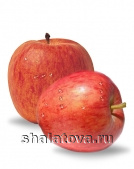 Яблоко Гала калибр 55+/ упаковка ±15 кг