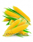 Кукуруза Краснодарская