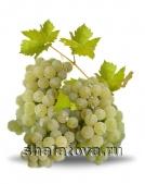 Виноград Мускат цитронный калибр ±0.2 кг/ без упаковки