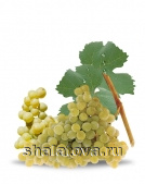 Виноград Пино блан калибр ±0.2 кг/ без упаковки