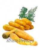 Морковь жёлтая Мелло калибр ±0.15 кг/ упаковка ±20 кг