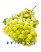 Виноград Кишмиш Зелёный