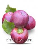 Яблоко Имант калибр 40+/ упаковка ±15 кг