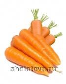 Морковь калибр ±16 см/ упаковка ±40 кг