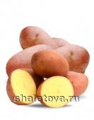 КартофельАроза калибр 50+/ упаковка ±30 кг