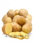 КартофельКоломбо калибр 60+/ упаковка ±30 кг