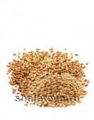 Пшеница Алексеич, 1 репродукция, озимая, мягкая, мешок, e ±50 кг