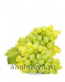 Виноград Плевен (Августин) с косточкой калибр ±1 кг/ упаковка ±8 кг